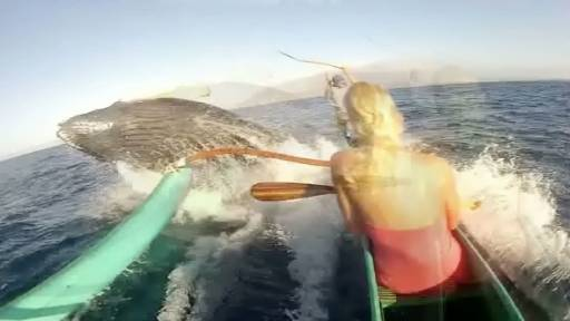 Humpback Whale 'Love Tap' Packs Quite the Punch