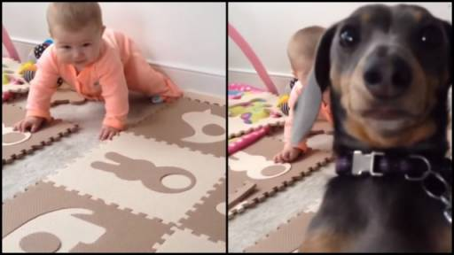 Pup Gets Jealous of Baby's Camera Time