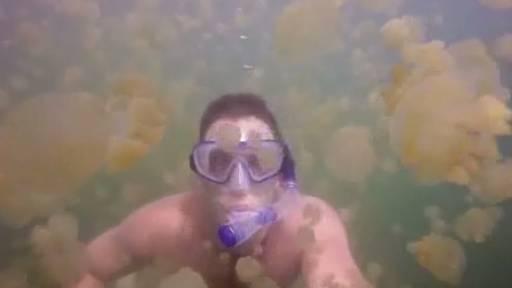 Swimming in a Lake Full of Jellyfish