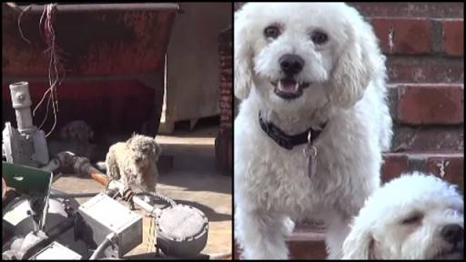 Two Adorable Dogs Rescued From a Junkyard