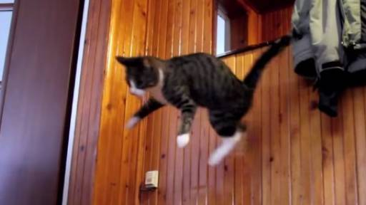This Cat Must Be Part Kangaroo