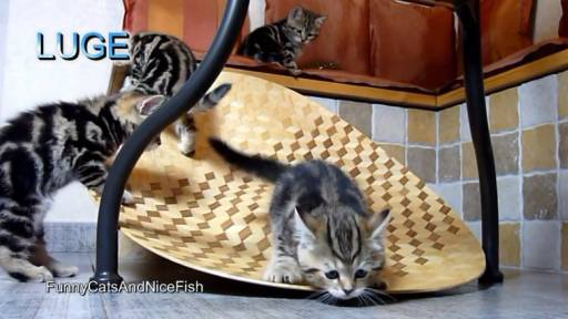 Kittens Join the Winter Olympics