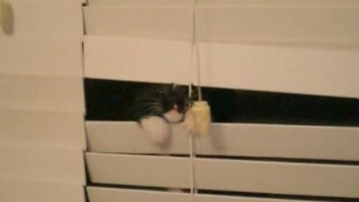 Kitten Super Amused by Window Blinds