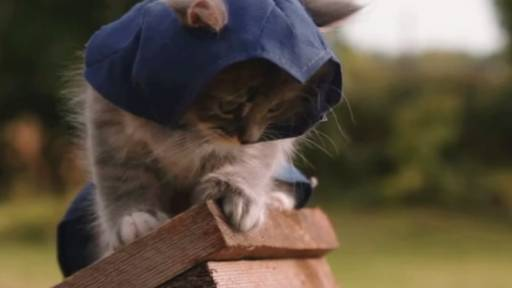 If Assassin's Creed Were Kittens