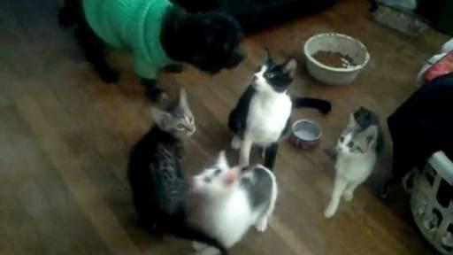 Jumping Kittens