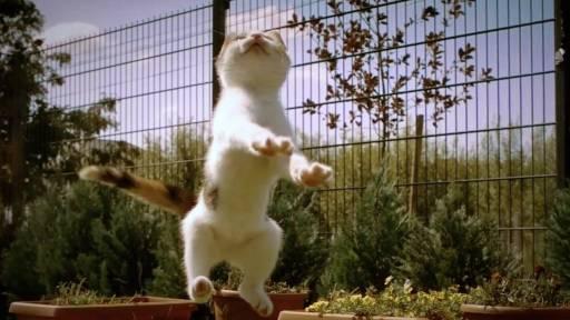 Kitten's Play Caught in Slow Motion