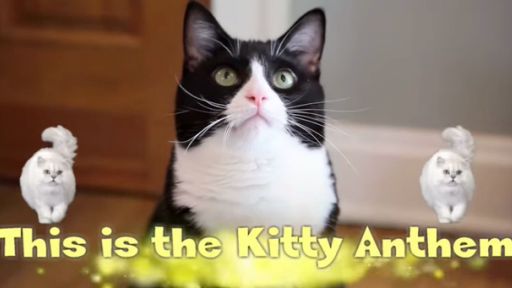 'The Kitty Anthem' Will Leave You Speechless...Seriously!