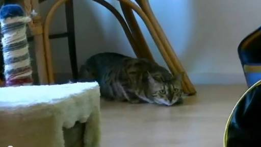 Daily Pet: Kitty Hates Fireworks