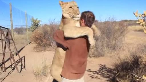 King of the Jungle? More Like King of the Hugs