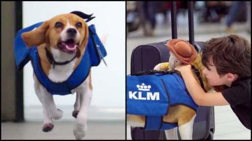 KLM's Lost & Found Dog Will Sniff You Out and Return Your Stuff
