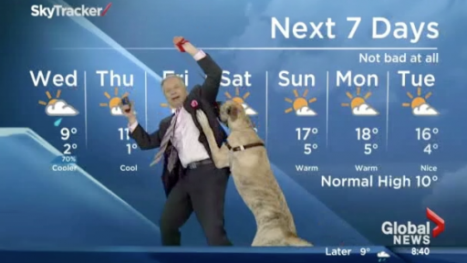 Weatherman Attempts and Fails Hilariously to Give the Live Forecast With a Dog