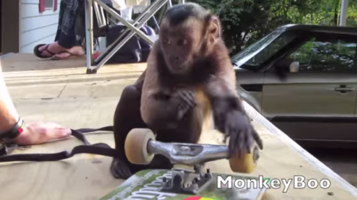 Skateboarding With a Monkey Has Never Looked So Fun
