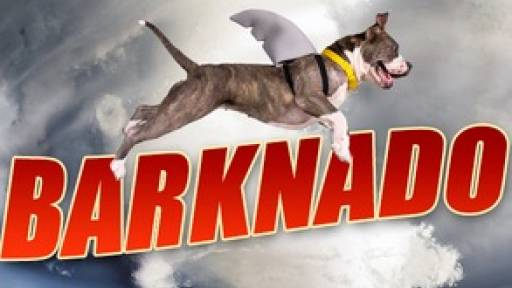 Forget Sharknado, There's a New Doggone Storm in Town