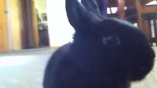 Bullet the Bunny Eats a Banana