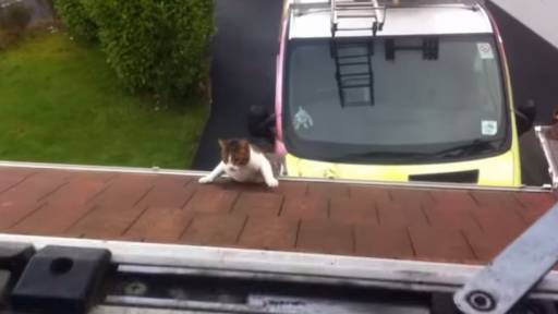 Cat Takes Giant Leap of Faith