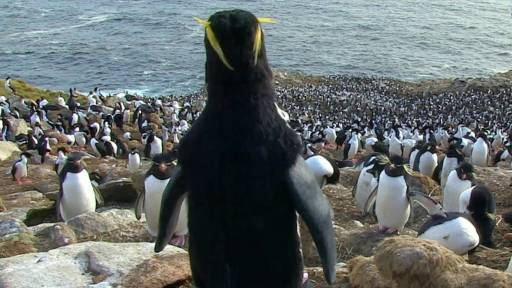 Penguin Imposters Stir Things Up