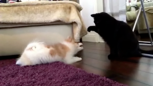 Punching Sound Effects Make Pet Play Fights Even Better!