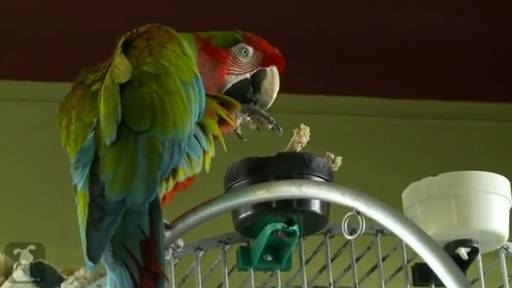 Daily Pet: Feeding a Parrot