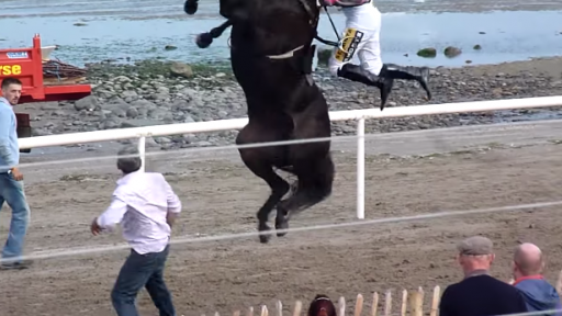 You've Probably Never Seen a Horse Do This Before