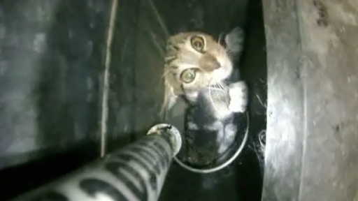 Rescue Crews Save Cat Trapped in a Vent