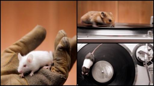 Rodents on Turntables Will Have You Mesmerized