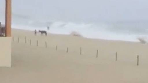 Woman Saves Horse from Drowning on a Beach