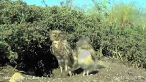 Squirrels Helping Owls