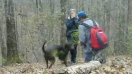 Dog Ruins Proposal