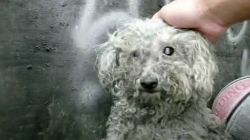 Homeless Blind Dog Rescued from Trash