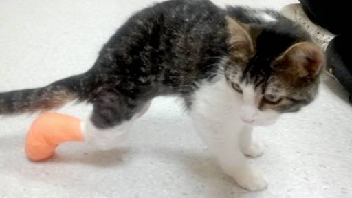 Cat with Rare Disorder Gets Back on its Feet