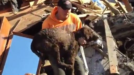 Family Dog Miraculously Found Alive in Rubble After Oso Mudslide