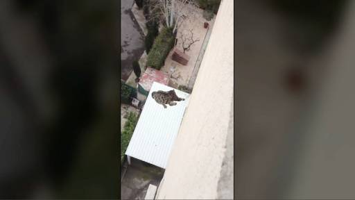 A Cat Proves it has at Least Two Lives After Surviving an Incredible Fall off a Building