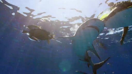 'Shark Week' Stumbles Upon 'Sharkageddon'