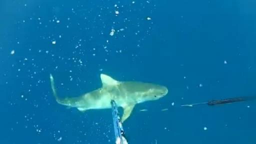 Fishermen Escape Tiger Shark on the Hunt