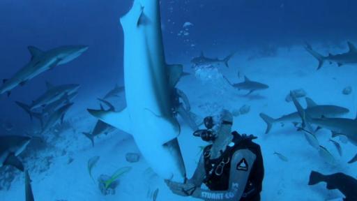 Exploring 'Zombie Sharks' During 'Shark Week'