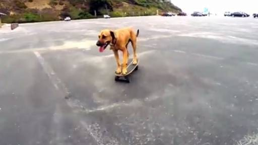 Skateboarding Dog Can Really Get Around