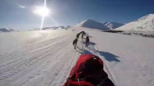 GoPro Footage Takes You on Dog Sled Adventure Through Alaska