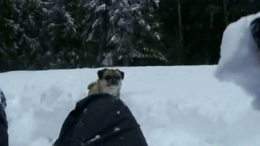 Playing Fetch With Snowballs