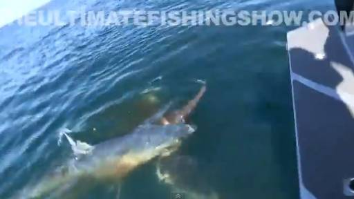 Giant Mako Shark Attacks Hooked Swordfish
