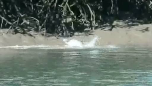 Dolphins Eat Takeout Meal on the Shore