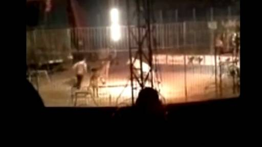 GRAPHIC: Tiger Kills Trainer During Performance