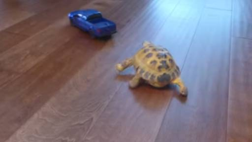 Tortoise vs. Truck: The Ultimate (Toy) Car Chase