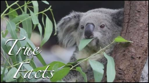 True Facts: Marsupials