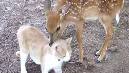 Cuteness Overload: Deer and Kitty Become Friends