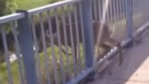 Oh, Deer! Family Saves Fawn Stuck in Fence