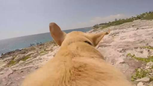 Walter the Dog Really Wants to Swim in the Ocean