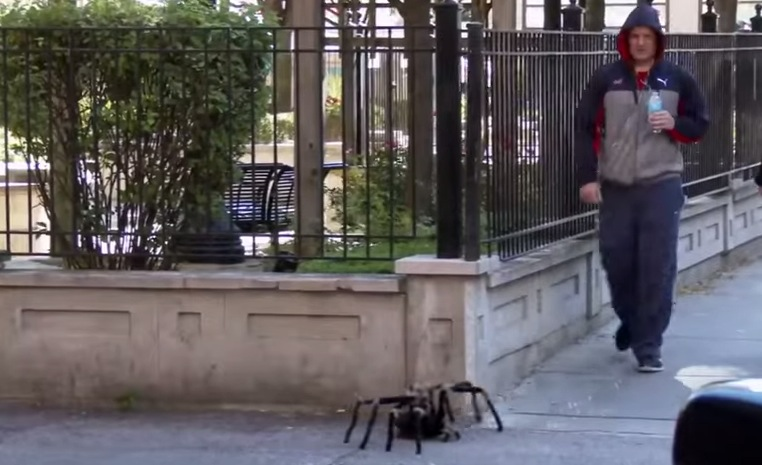 Big Spider Attack Remote Controlled Spiders City Pranks