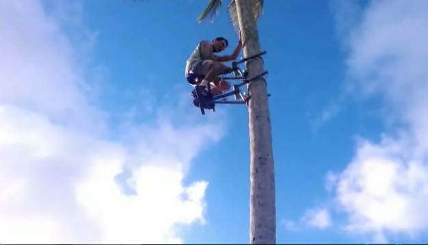 we Eat Trees Way we Climb Trees | Rtm