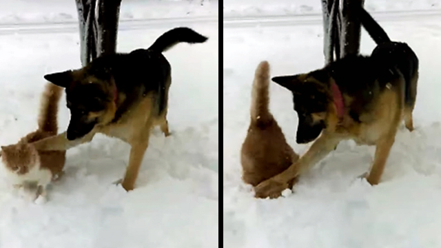 Dog Face Plants Cat Straight Into A Pile Of Snow Rtm