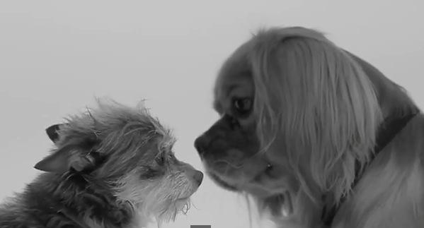 حس ششم سگ ها
